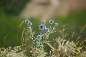 Coaching nature metanature
